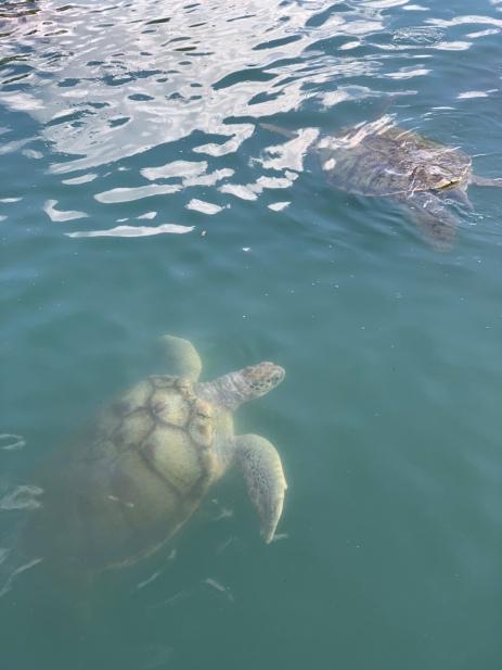 turtle farm (2)